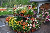 foto of shopping center  - Green house shop with potted flowers at garden centre - JPG