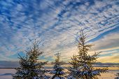 foto of cloud formation  -  Evergreen trees silhouetted by a dramatic cloud formation at sunset - JPG