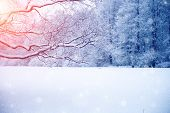 Winter wonderland scene background, landscape. Trees, forest in snow. Christmas, New Year time poster