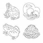 Vector Design Of Amphibian And Animal Symbol. Set Of Amphibian And Nature Vector Icon For Stock. poster