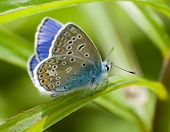 stock photo of blue butterfly  - Summer sunny day - JPG