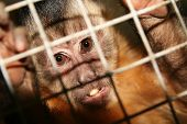 Monkey Zoo Laboratory Cage