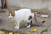 Animals, Pets, Stray Cats Concept. Stray Cat Outdoors. Pets, Animals, Cats Concept. Cat On The Stree poster