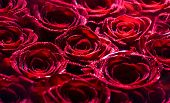 Red Rose Flower, Petals. Bouquet Of Flowers, Fresh Red Rose. Collage Of Red Roses. Bouquet Of Fresh  poster