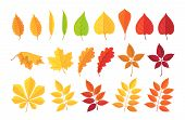 Autumn Leave. Set Of Botanical Forest Plants, Yellow, Red Autumn Leaf, Fallen Dry Leaves Isolated On poster