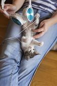 Top View Of A Woman Holding And Cuddling Beautiful Little Grey And White Kitten In Her Lap; Kitten P poster