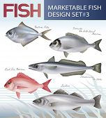 Marketable fish. Vector design set 3.