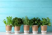 Seedlings Of Different Aromatic Herbs In Paper Cups With Name Labels On White Wooden Table poster