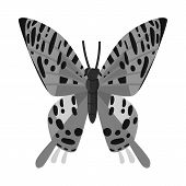Vector Illustration Of Butterfly And Zoology Symbol. Collection Of Butterfly And Wildlife Stock Vect poster