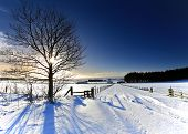 stock photo of frozen  - Winter Landscape after heavy snowfall taken into sun to create sunstar on tree - JPG