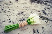 pic of sand lilies  - Elegant wedding bouquet of white lilies on the beach - JPG