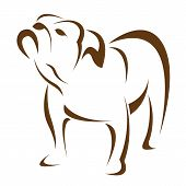 image of bulldog  - Vector image of an dog  - JPG