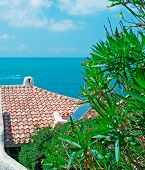 stock photo of oleander  - oleander and roof by the shore in Sardinia - JPG
