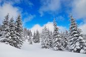 Winter view in a mountain forest covered with fresh snow. Christmas landscape