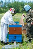 Beekeepers Open Beehive After Smoking