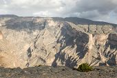 image of jabal  - Bush growing on an edge of a canyon - JPG