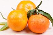 image of clementine-orange  - three orange  clementines on the wooden table - JPG