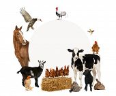 foto of herbivore animal  - Group of farm animals surrounding a blank sign - JPG
