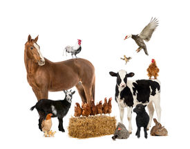 foto of herbivore  - Group of farm animals - JPG