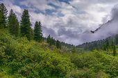 stock photo of siberia  - Dense bushland in a mountain valley - JPG