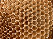 stock photo of larvae  - Honey bee larva in comb honeycomb and development of the bee - JPG