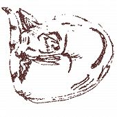 picture of modifier  - Sleeping cat curled up  - JPG