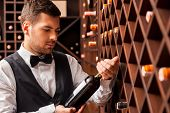 Постер, плакат: Choosing The Right Wine