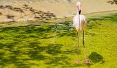 pic of pink flamingos  - close up of a pink flamingo in a pond - JPG