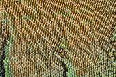 picture of lizard skin  - Scale of Skin Texture Pattern Green Iguana - JPG