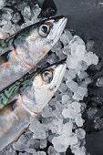 stock photo of catch fish  - Fresh catch whole fish on ice and slate background - JPG