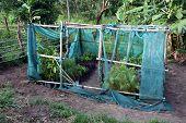 stock photo of sudan  - Tree nursery in a demonstration farm in Morobo County - JPG