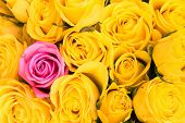 image of one dozen roses  - one is unique - JPG