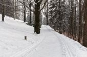 Empty Snow Covered Road In Winter Landscape poster