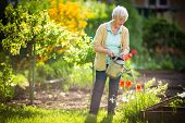 Senior woman doing some gardening in her lovely garden - watering the plants poster