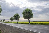 Asphalt Road With Trees On The Roadside. Field Of Blossoming Rape On The Side Of The Road. Field Of  poster