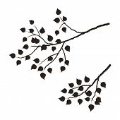 Silhouette Of A Tree Branch On A White Background. A Branch Of Birch Tree With Leaves.  It Can Be Us poster