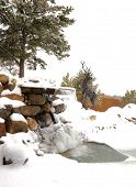 Winter Wonderland In Our Front Yard With Waterfall poster