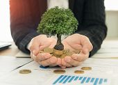 Investment Growth Concept, Business People Holding Tree Grow On Coin Stack. Investing Success. poster