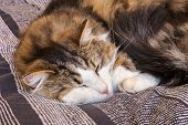 Closeup Of Tired Tabby Kitten Relaxing On Blue Duvet poster