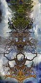 Abstract trees. Symmetric branches and roots. 3D rendering poster