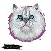 British Longhair Cat Isolated On White Background. Digital Art Illustration Of Hand Drawn Kitty For  poster