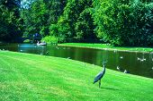 Beautiful Park With A Pond, Ducks And Beautiful Nature. Copenhagen. Denmark. Rest Zone. poster