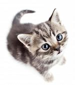 foto of pussy  - little baby kitten looking upwards top view - JPG