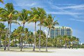 Palm Trees On The Beach In Miami Beach, South Beach, Usa. poster