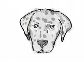 Retro Cartoon Style Drawing Of Head Of An American Leopard Hound  , A Domestic Dog Or Canine Breed O poster