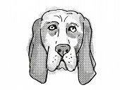 Retro Cartoon Style Drawing Of Head Of A Basset Hound , A Domestic Dog Or Canine Breed On Isolated W poster