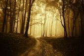stock photo of rainy weather  - Road in a dark forest with fog - JPG