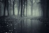 Lake in a dark forest with fog