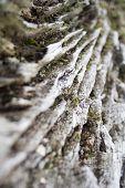 Weathered Tree Stump poster