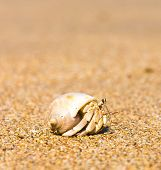 stock photo of crab  - Seafood Posing Funny Crab - JPG